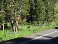 Yellowstone and Glacier trip