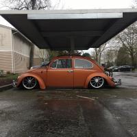 Bagged Bug