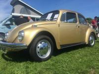 Hellas Gold bug