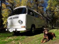 sunnydog fall 2018