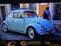 Beetle in Mexico