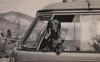 Barndoor Kombi and dog