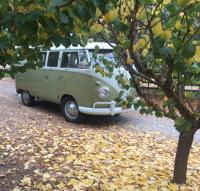 Hiding Behind Autumn Colors