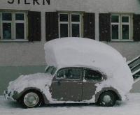 Snowhawk Bug