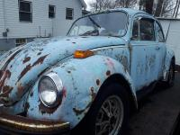 Shawn's Beetle Find