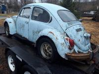 Shawn's Beetle Find continued