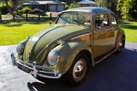 Australian 1961 beetle 50/50