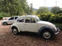 newly aquired 69 beetle