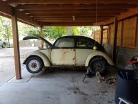 My August 1950 Split Window Beetle