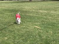 Another Sunny Park Day