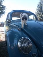 Cats and Vw's