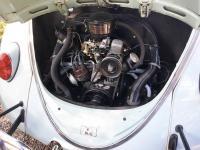 64 beetle