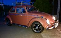 Early 58 coral beetle