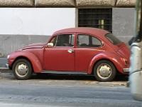 Rome beetle