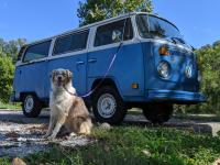 1978 Type 2 & doggo