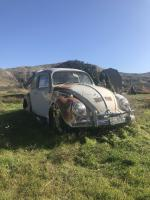 1964 beetle rescue