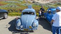 """Bugs at the """"SHE-852 Pt. Reyes Cruise"""", California. Sunday Oct. 20th, 2019"""