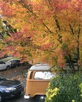 Bays in Fall