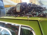 rats nest under cargo top