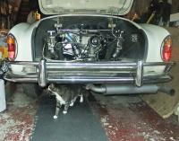 My cat with 1964 Ghia Cabriolet