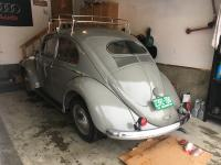 Jan 54' Euro beetle