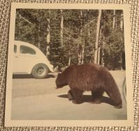 Yellowstone 1968