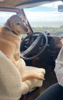 charley drives