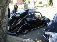 Split Window Beetles