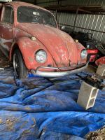 67 beetle project