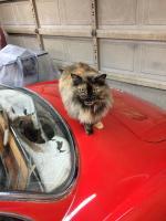 Cat and ghia