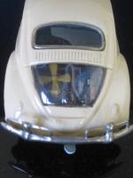 Japan tin beetle
