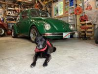73 bug dog