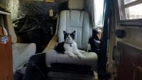 Dingo Cat hanging out in the bus