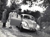beetles in ireland
