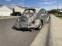 1964 Anthracite Beetle