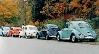 Beetles at Kent Falls State Park, Ct Oct. 1999