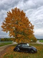 1983 Mexican Special Bug in Fall Foilage