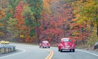VWs on Classic VW Bugs' Foliage Tour, Oct. 24 2020