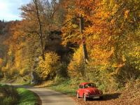 1984 Mexican Velvet Red Beetle in Fall Foilage