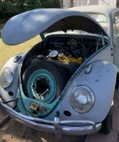1960 bug Arizona find