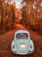 November fall foilage