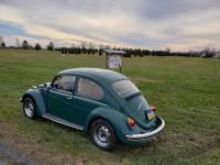 beetle at tree farm