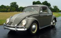 62 beetle