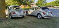 Two Mexican Beetles
