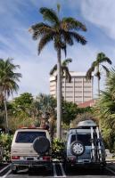 Westie@Palm Harbor Marina