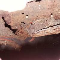 Type 3 fender rust