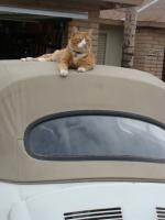 Cat on my 1971