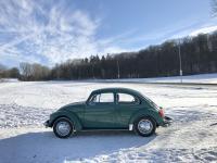 Winter Beetle
