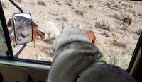 Vanagon, Tuna, and wild horses