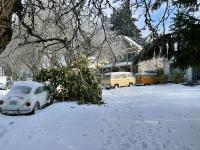 VWs in snow